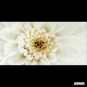 Діаго квітка В 29,7х60 OPOCZNO Декор